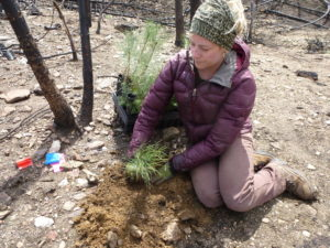 Woman planting seedling trees